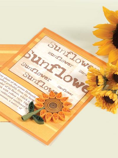 Sunflower Defined photo